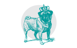 Illustration of a pug dog